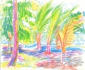 Palms sketch/ El Mar