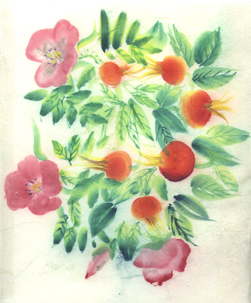 Wild Roses and Hips