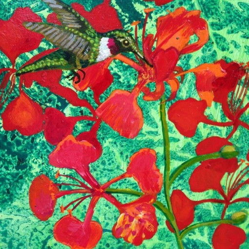 "Hummingbird & Poinciana.  12""x12 Acrylic on board"