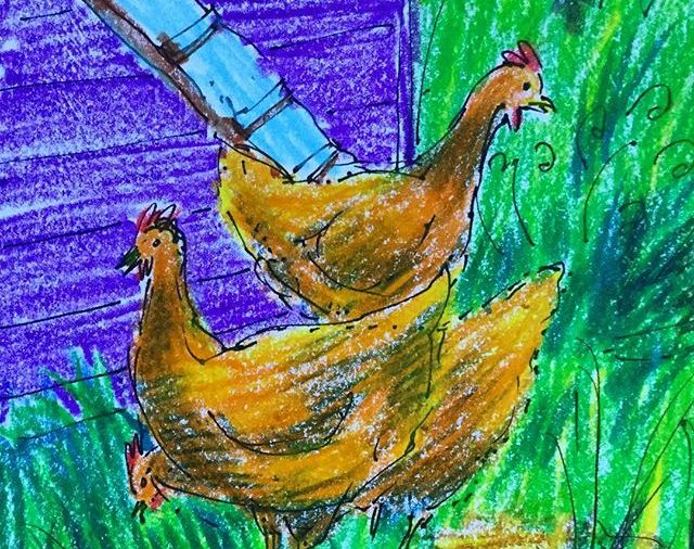 Stacey's chickens....in  Hollis, Maine....Day  226