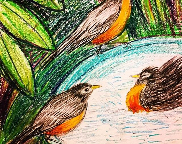 Robin Day today!  Every January they show up in St Augustine & frolic in my birdbath, at my house at least. In the last few years they have visited 1 day only. I'd love to know more about their habits...Some like to bathe quite very vigorously....Day 12