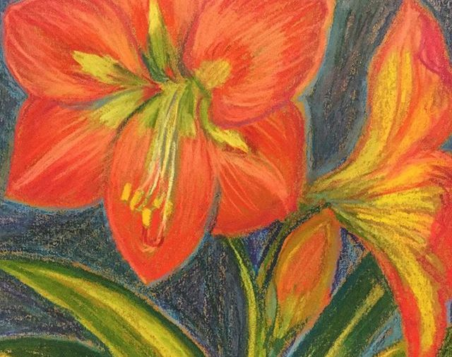 """KateMerrick/""""Another Amaryllis""""/8.5x12""""/WCcrayon... last one in this series... it's more pink than orange actually, but it photographs this way...Day 93"""
