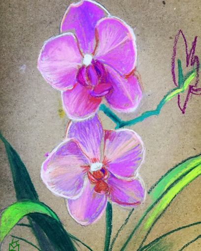"""""""Pink Orchid""""...surreal- looking, Phalaenopsis is the proper description... I love them... Day 281... 8.5x11""""/pastel"""